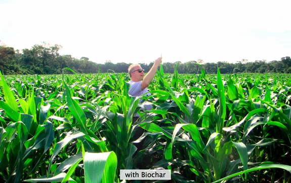 Corn without biochar