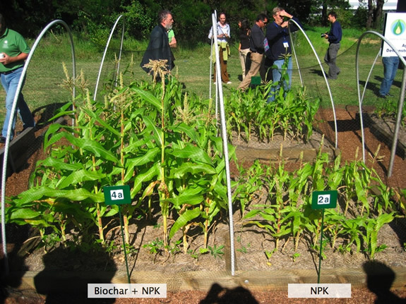 Biochar with NPK compared to NPK alone