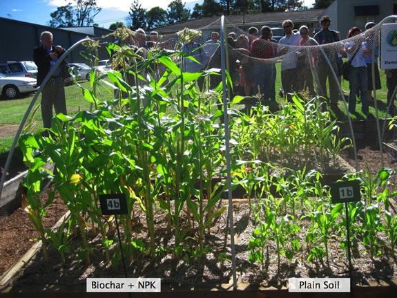 Biochar plus NPK compared to unamended soil